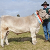 2013-bendigo-beef-spectacular-hydraulic-h87